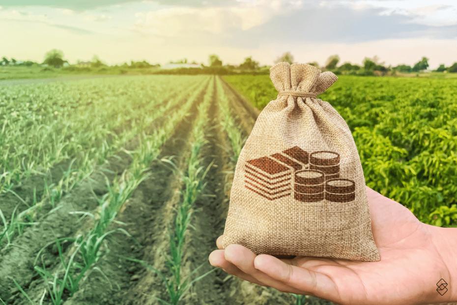 uma mão segurando um pacote em frente a uma plantação